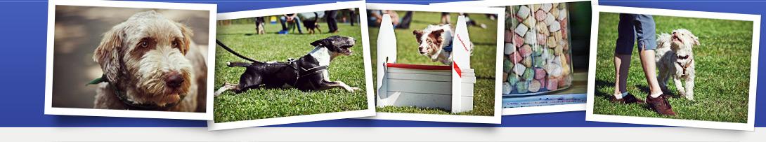 HundesportLich